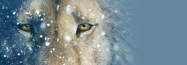"""Narnia 4 : La mise en chantier du """"Fauteuil d'Argent"""" confirmée !"""